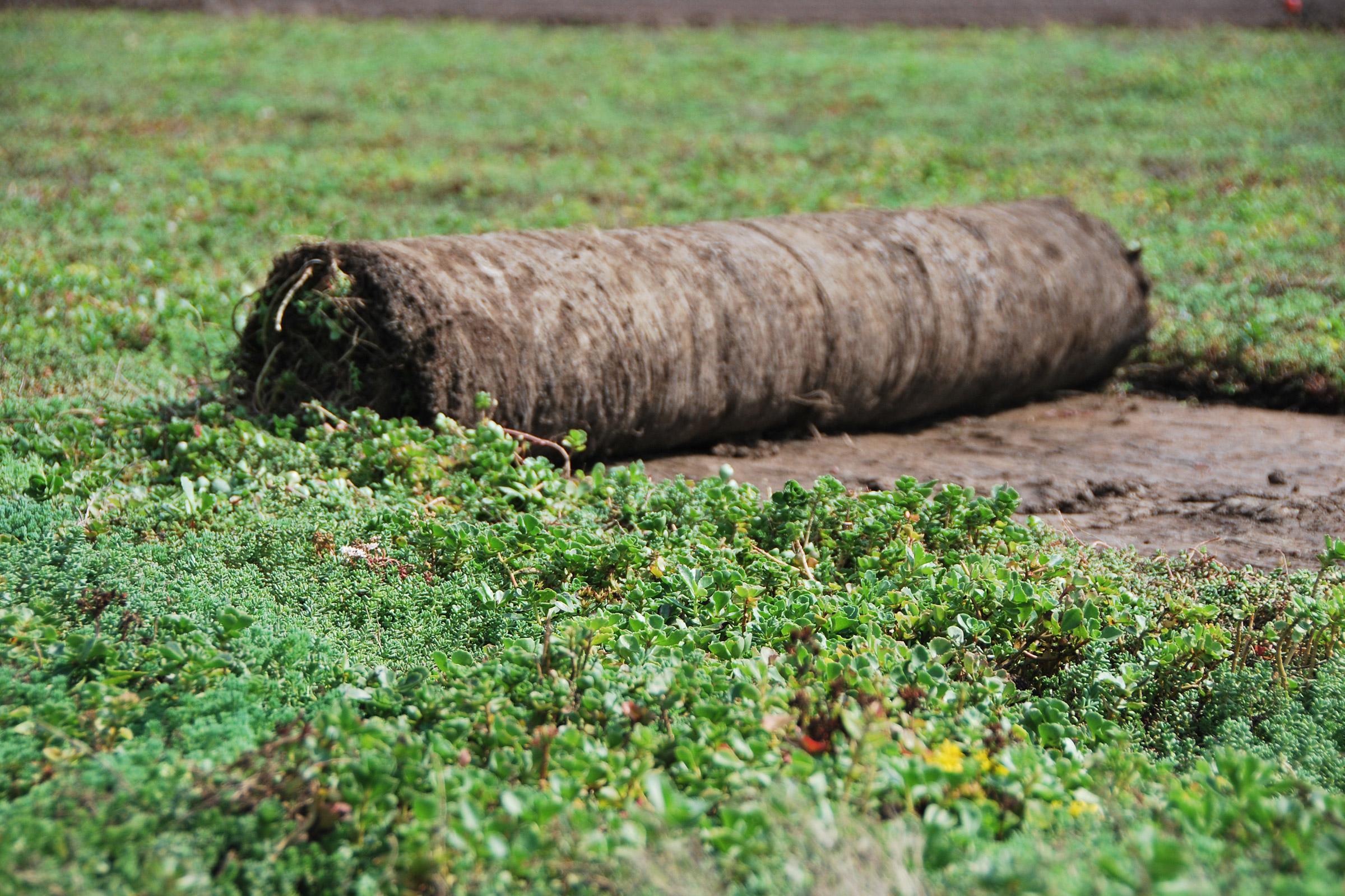 Vegetačné koberce