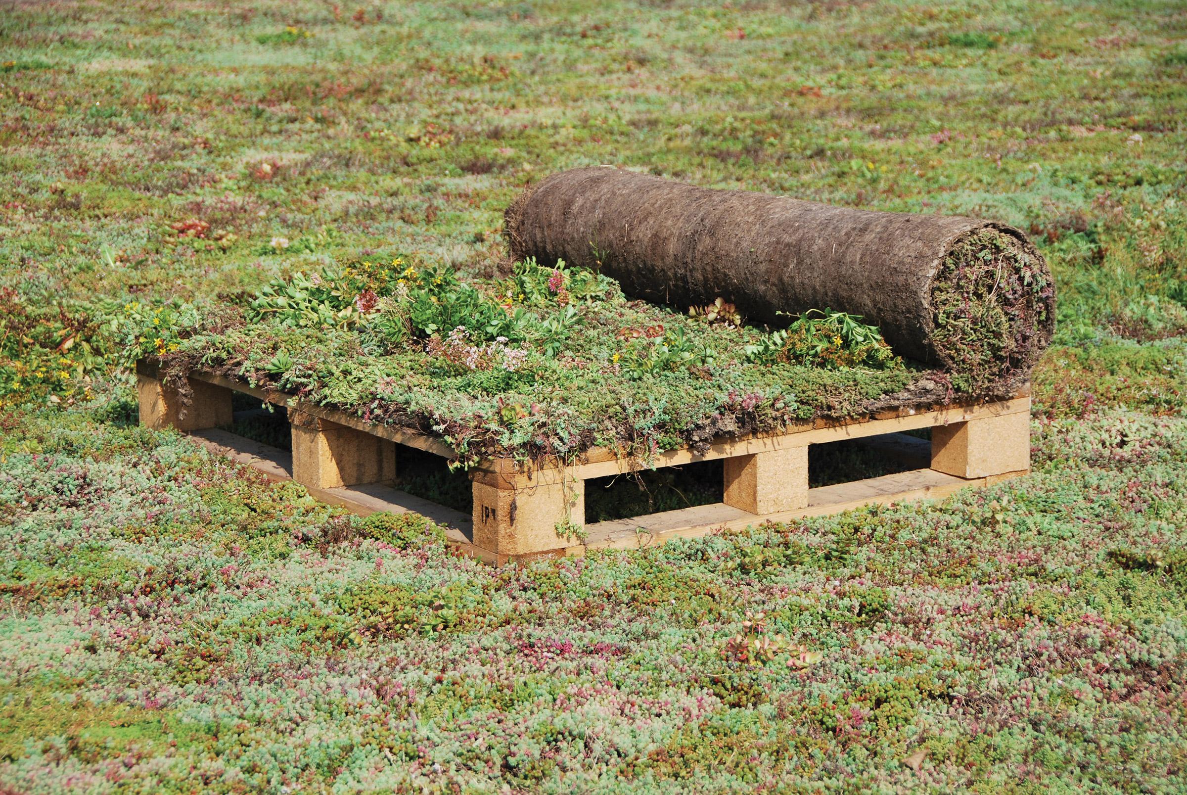 Vegetationsmatten, Sedummix-Matte Typ T